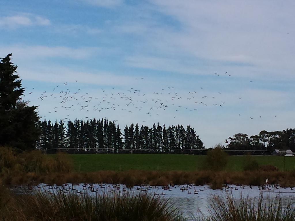 A Few Birds on the Pond