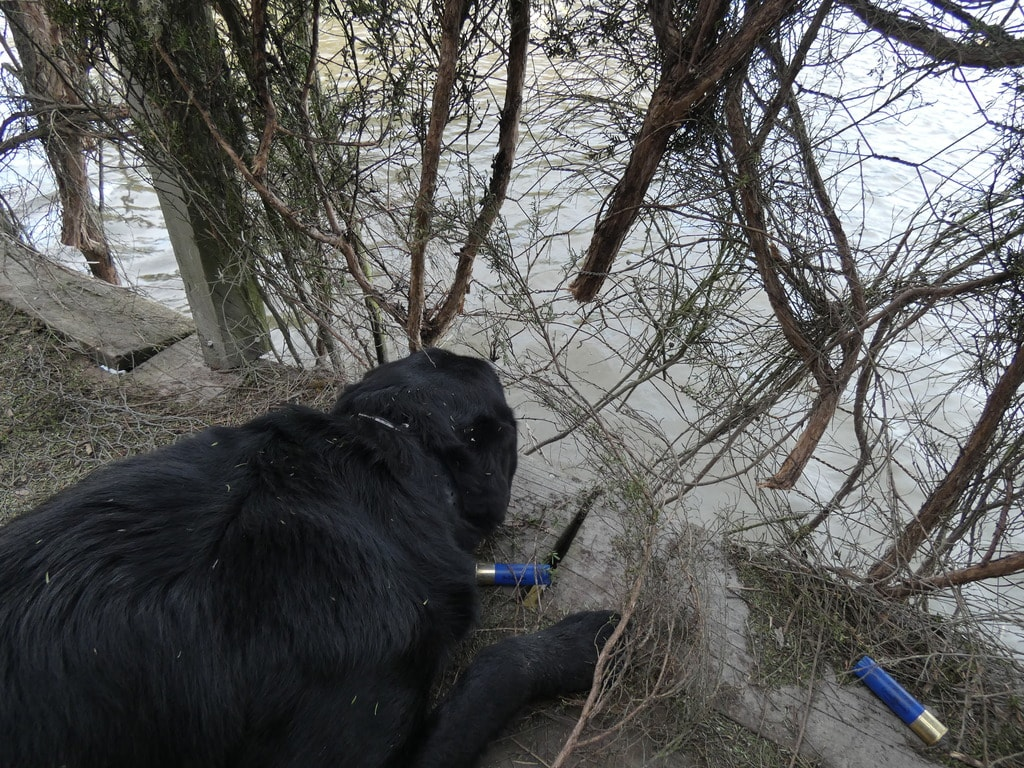 ace wanting to retrieve